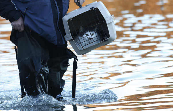 A man carries a pet cat through flood water in Yalding, southern England