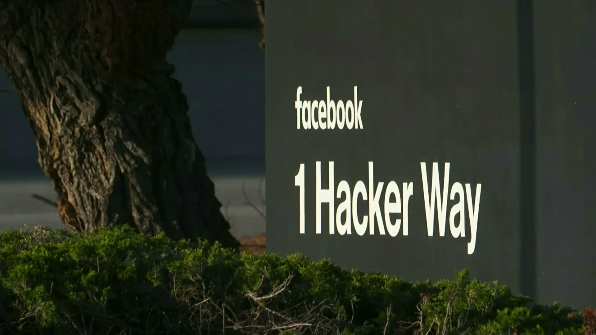 Christchurch Live Stream: Social Media Firms Under Fire After Live-streaming Of
