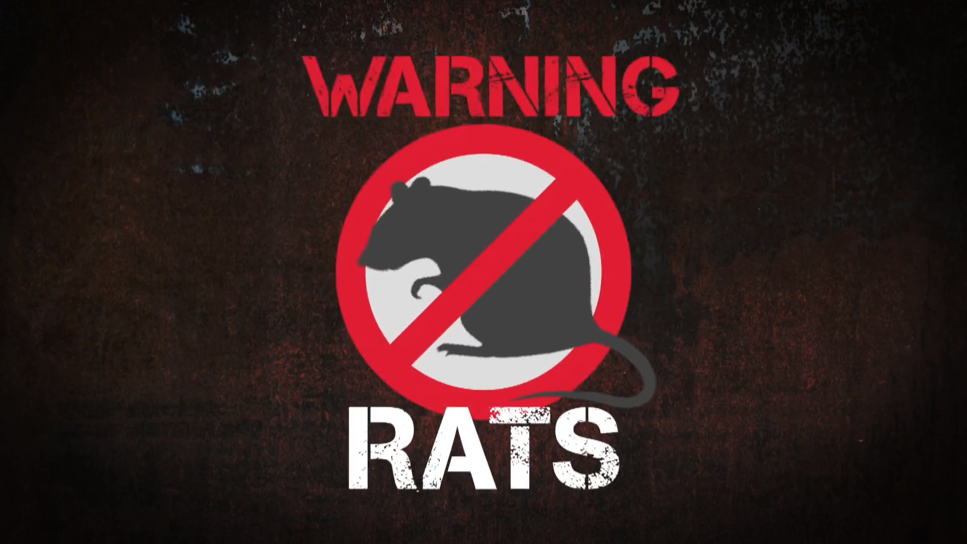 Invasion of the rodents a grim reality of lockdown