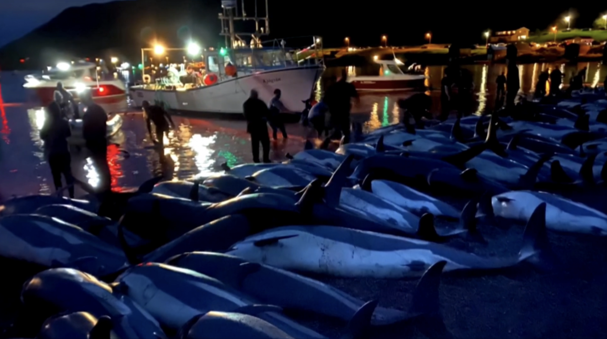 Hunters kill nearly 1,500 dolphins in Faroe Islands sparking outcry